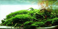 Manage your freshwater aquarium, tropical fishes and plants: Aquatic Scapers Europe - International Aquascaping Contest 2010 Results