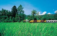 With a Queensland Explorer Pass travel from Cairns in the north, to Brisbane in the south. Visit our site and book your pass today! Rail Pass, Golf Courses, Australia, Explore, Travel, Viajes, Destinations, Traveling, Trips