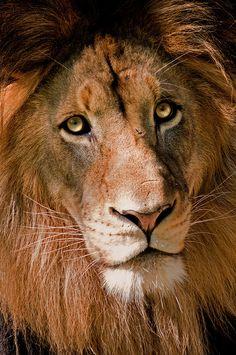 Luke the Lion 4-0 F LR 9-18-10 J208