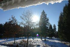 Ein strahlend schöner Tag im Winter bei München - Tiere im Schnee im Forstenrieder Park