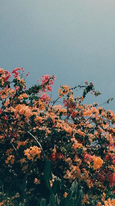 wild flower and sky aesthetic vintage wallpaper background Tumblr Wallpaper, Wallpaper Quotes, Wallpaper Backgrounds, Tumblr Backgrounds, Trendy Wallpaper, Colorful Wallpaper, Black Wallpaper, Wallpaper Ideas, Mobile Wallpaper