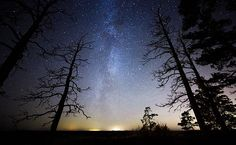 Tree silhouettes at starry night - Dead wood with stars and the night sky on the background. The Milky Way is just behind the tree.
