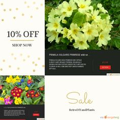 10% OFF on select products. Hurry, sale ending soon!  Check out our discounted products now: https://orangetwig.com/shops/AAB5v98/campaigns/AACeg99?cb=2016004&sn=RetroDIYandPlants&ch=pin&crid=AACeg8a&utm_source=Pinterest&utm_medium=Orangetwig_Marketing&utm_campaign=SPRING_GARDEN_PLANTS