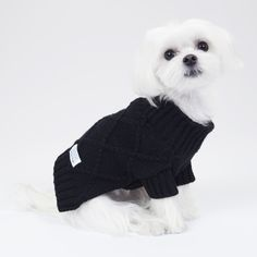 Cute baby with her favorite black sweater! #unitedpups #dogsweater #sweater #blacksweater #black #white #blackandwhite #stylish #stylishdog #chic #maltese #maltipom #maltipoo #shihtzu #yorkie #pomeranian #chihuahua #dachshund #cavalier #japanesechin #puppylove #puppy #poodle #pug #dog #pup #blackisbeautiful #cool #rock #punk