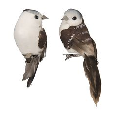 Decoratie vogeltjes xenos