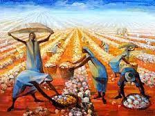 Resultado de imagem para colheita de algodão