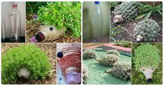 Decorate your garden with these adorable hedgehog planters that are recycled from plastic bottles! Don't they look cute and they will certainly add some personality to your yard. Be sure to scroll our post to view all the versions! get tutorial >> Hedgehog Plastic Bottle PlantersTutorial get tutorial >> Hedgehog Planters get tutorial >> Hedgehog …
