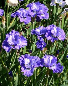 Blueberry Fair PHOTO: BOB HOLLINGWORTH