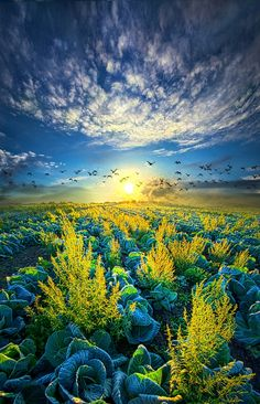 That Voices Never Shared - Wisconsin Horizons By Phil Koch. http://phil-koch.artistwebsites.com