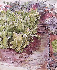 Lettuce bed in the garden at Fawe Park, Beatrix Potter   The Real Mr. McGregor's Garden   V&A