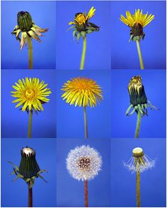 Visible Mending, Dandelion Flower, Preschool At Home, Art Courses, Art Club, Ribbon Embroidery, Botanical Illustration, Art Techniques, Paper Cutting