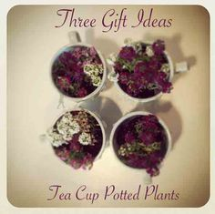 Potted plant gift inspiration click to see more ideas keywords three gift ideas tea cup potted plants gift hostess easter birthday negle Images