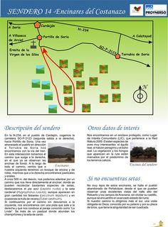 Senderos micológicos del Noreste de Soria.