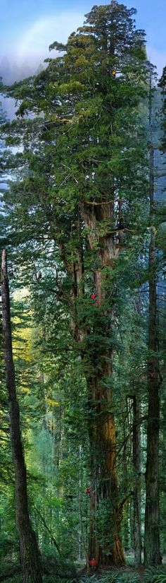 Prairie Creek Redwoods State Park, California. by Michael Nichols How many men do you count?