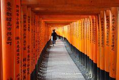Travel Japan Itinerary 1 week  Tokyo Osaka Kyoto Hiroshima Miyajima Hakone  Nara Fushimi Inari Japan dd013f2b8c