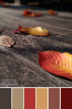 paletas de colores 22 novedades en colores 5