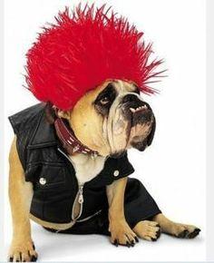 Costumi di carnevale... per cagnolini