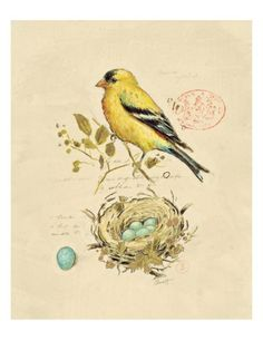 Gilded Songbird 2 Giclee Print by Chad Barrett at Art.com