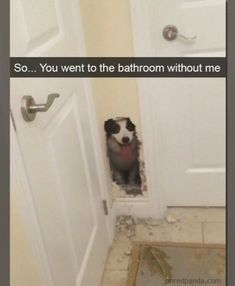 If you've been longing for a good old-fashioned roundup of memes, look no further! 34 Side-Splitting Memes That You Won't Regret Scrolling Through - Funny memes that Memes Estúpidos, Funny Dog Memes, Funny Animal Memes, Cute Funny Animals, Funny Animal Pictures, Cute Baby Animals, Funny Cute, Funny Dogs, Funniest Memes