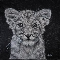 In Honor Of: 🦁 ᗯOᖇᒪᗪ ᒪIOᑎ ᗪᗩY 🦁 August 10, 2020  🐾🐾 #worldlionday #lions #lion #rainbowriverart #lionart #heidilechner #cannedhunting #bigcats #savelions #lionking #lion #art #artist #bantrophyhunting #king #predators #sketch #lioncub #cubpetting World Lion Day, Rainbow River, Trophy Hunting, Lion Art, August 10, Hyde, Big Cats, Graphite, Lions