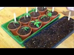 Top Tips for Starting Seeds Indoors - YouTube from growveg.com