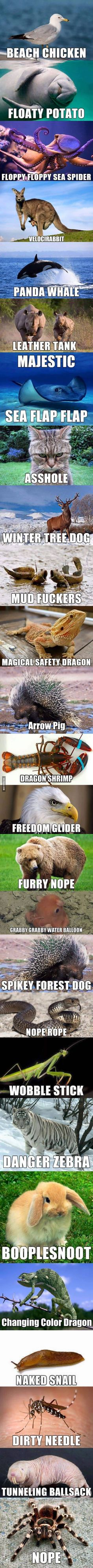 26 Hilarious But Accurate Creature Names - 9GAG I think velocirabbit is my favourite!!