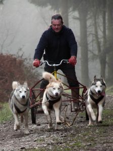 Siberian Huskies pulling a sled/cart -Thought about getting one if we had another dog.