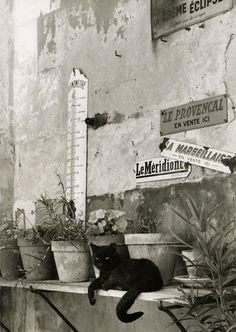 Black kitty on bench with potted plants in France with metal signs on wall Photo in black-and-white