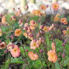 You do things… Garden Line, Mai Tai, Back Gardens, Garden Inspiration, Garden Ideas, Dream Garden, Trees To Plant, Spring Flowers, Garden Plants