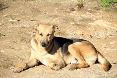 PANCHO - 696 652 749 - Macho - Nacido en 2006 - 10 kg. - Estuvo alrededor de una casa durante un año, una buena persona le daba de comer y beber con el paso del tiempo el perro cogió confianza y lo pudieron llevar al Refugio. Miedoso, tímido pero muy divertido y juguetón. Sociable con personas y perros.