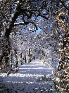 carpinata di Villa Panza - under the snow