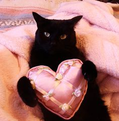 Happy Valentines Day! I would be so tickled to receive this for V Day! I've wanted a solid black cat for some time now. I'll eventually adopt one, when the time comes