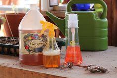 Apple cider vinegar weed killer.- Go green!