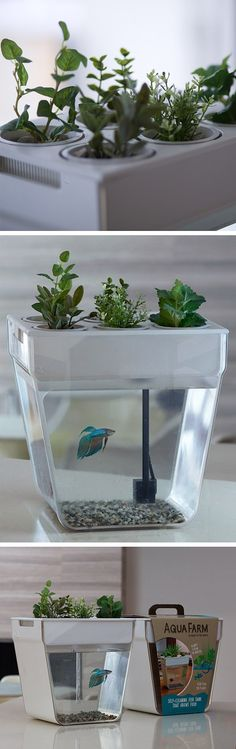 Aqua Farm is a self-cleaning fish tank that grows food. Just in case my kid wants a fish one day.