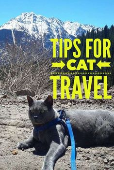 image cat travel tips