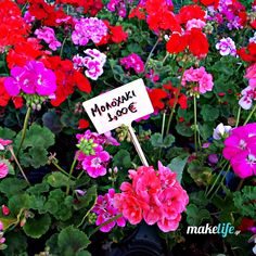 8 perfect flowers for my balcony for only 16 euros – Flowers Flowers Balcony, Flower Arrangements, Home And Garden, Backyard, Flowers, Plants, Diy, Gelato Shop, Gardening