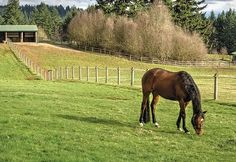Vet's Top 10 Mud Tips - Horse&Rider Horse Paddock, Horse Stables, Horse Farms, Small Horse Barns, Horse Water, Loafing Shed, Run In Shed, Future Farms, Horse Property