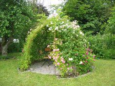 Trädgårdsforumet  Projekt Rosarium