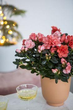 Sind Sie startbereit für die Feiertage? Dann dürfen auch Blumen und Pflanzen nicht fehlen.