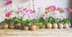 Kokedama : le guide de cet art floral venu du Japon !