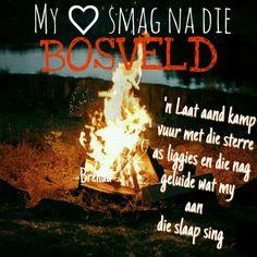 Bosveld