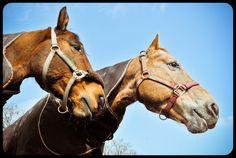 http://www.legendeligeia.fr/photos/deux-copains.html