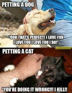 Differences between dogs and cats