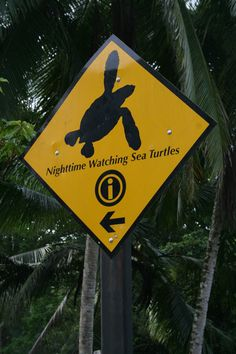 Travel with us to SEE sea turtles in Costa Rica & support conservation www.seeturtles.org