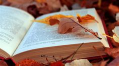 Lovely image of autumn leaves and book
