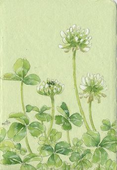 Watercolor Leaves, Watercolor Paintings, Plant Painting, Beginner Painting, Japanese Painting, Floral Illustrations, Tile Art, Botanical Art, Watercolor Illustration
