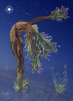 Spirit of Rosemary Spirit, World, The World
