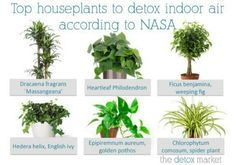 Top house plants to detox indoors