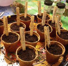 Simple et efficace : les pinces à linges pour noter les plantations en pot - Happiness crafty : Creative Ideas For Plant Markers