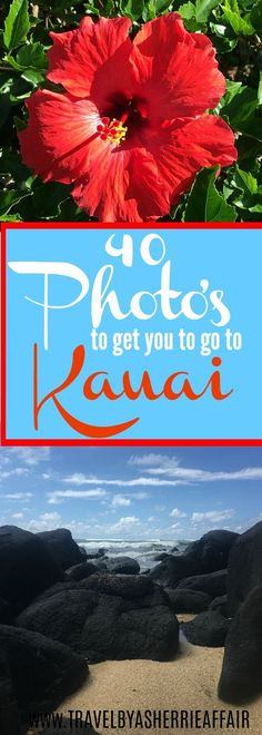 Do you ever think about going to Kauai, Hawaii?  Well here is 40 photos that might help you decide.  Lush green landscapes, beaches, flowers, golfing, canyons, wildlife, Hindu Temple!  #kauai #hawaii #travel #golf #hindutemple #wildlife